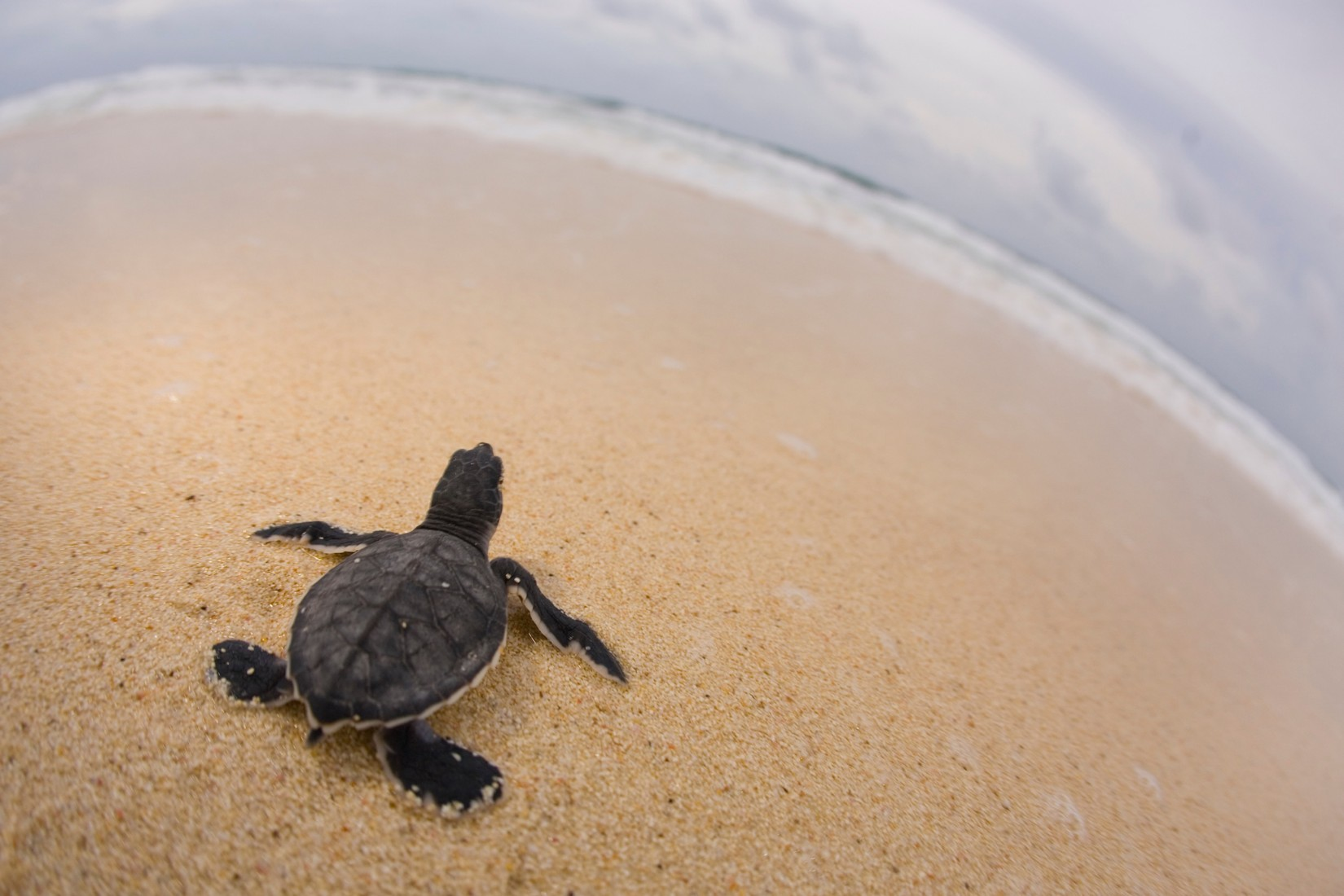 Save A Sea Turtle Tour CZT1 3