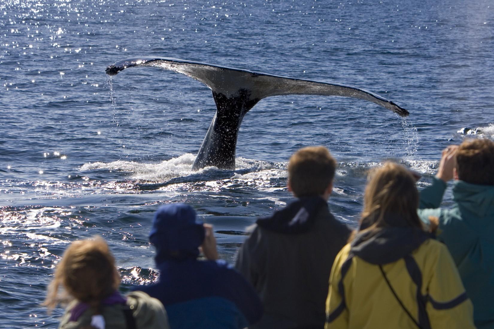 whale-watching-royal-caribbean-st-john