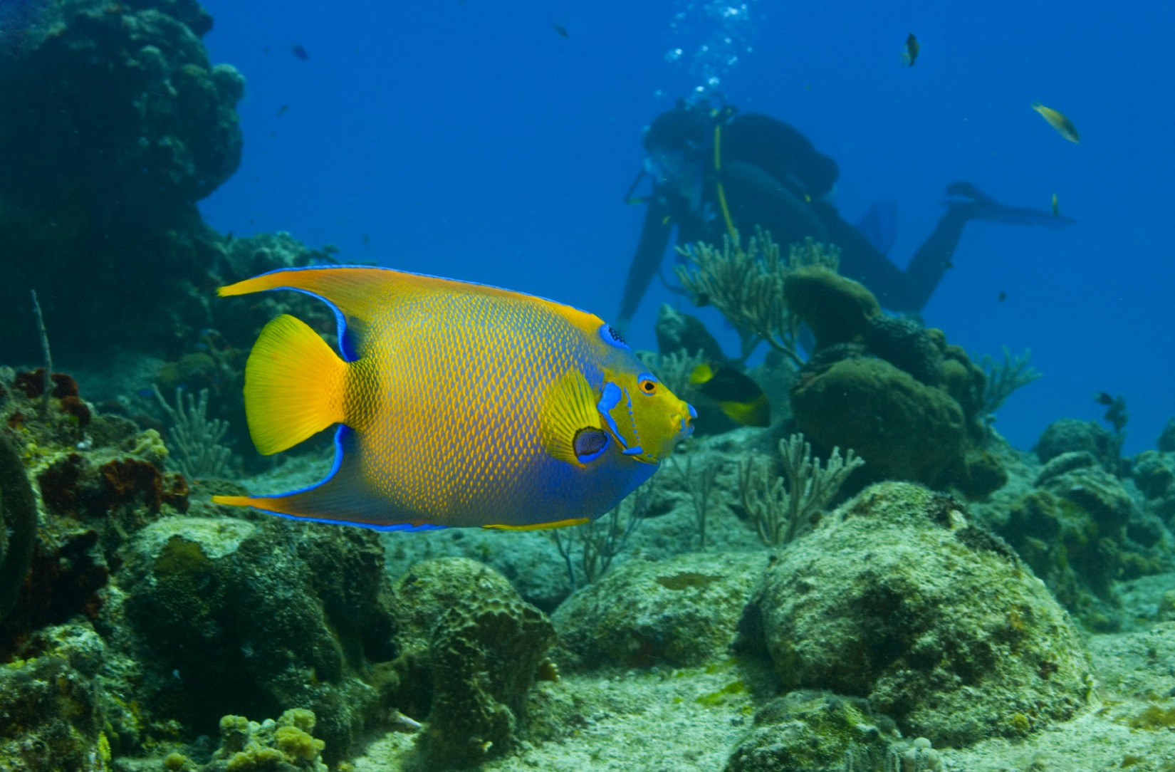 cozumel-queen-angelfish-royal-caribbean