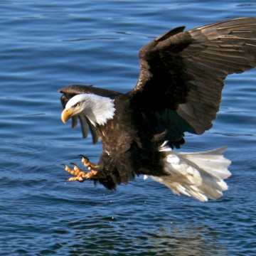 Thumbnail: The Best Animal Sightings on Alaska's Inside Passage